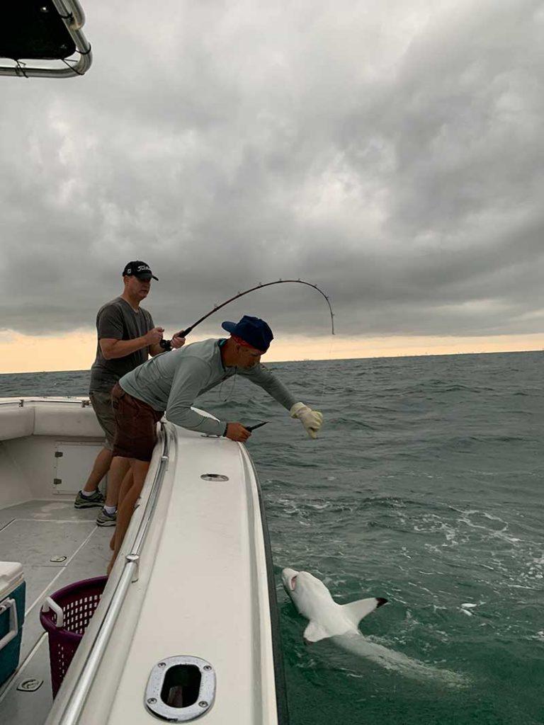 Deck handing helping angler reel in blacktip shark
