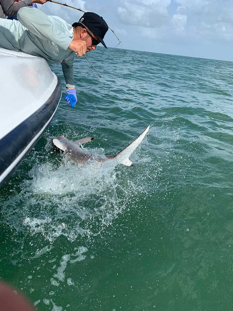Shark thrasing alongside boat while angler tries to reel it in