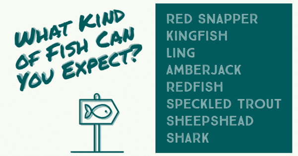 List of fish you can expect to catch on the Gulf of Mexico; red snapper, kingfish, ling, amberjack, redfish, speckled trout, sheepshead, shark